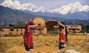 Nepal Farming